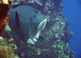 e42b43d8db-6bali-tulamben-underwater-volcano-07